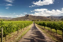 The Hunter Valley In Australia